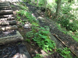 Revegetation Required on Chimney Tops Trail