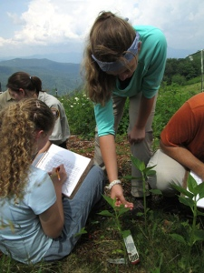 students examine plants for ozone damage